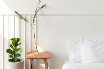 Indoor plants that don't need natural light